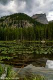 Fern Lake Afternoon