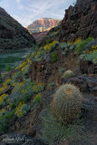 Sunset Granite and cactus - River Mile 96.5
