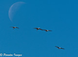 Formation coming in for landing against the moon