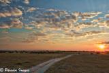 Big Herd at Sunset - Chobe National Park