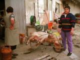 1186. A matança da porca