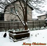1347. Merry Christmas