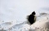 1530. Mizzie in the snow