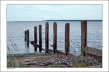 Groynes, Tay and Tentsmuir Forest