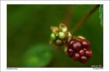 Berry, berry halle