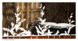 640. Merry springtime