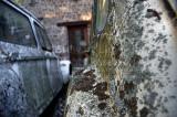 715. Deux Deux Chevaux sous la lichen