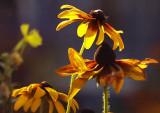 755. Just a little flower shot