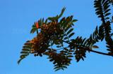 790. One red leaf