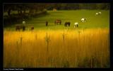 938. Horses