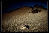 1003. As dunas