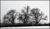 1040. Christmas trees
