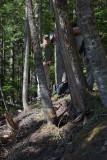 Tree Split By Landslide Fracture (DemingGl_080713-49-10.jpg)