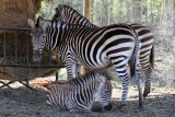 Virginia Safari Park - April 15, 2016