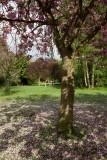 Springhead Park IMG_2927.jpg