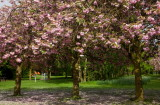 Springhead Park IMG_2930.jpg