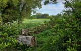 Springhead Park IMG_2983.jpg