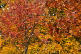 Autumn colours IMG_0049.jpg