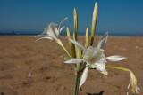 Cyprus IMG_6470.jpg