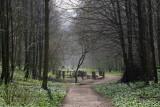Millington Wood IMG_0716p.jpg