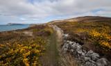 Pembrokeshire coast IMG_0316.jpg