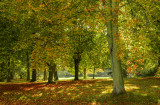 Normanby Hall grounds IMG_6211.jpg