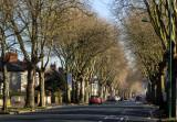 Cottingham Rd IMG_1860.jpg