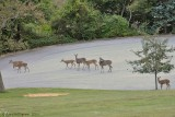 Five Fawns & Two Does