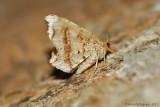 Moth-sp.---2013-July-15---0083.jpg