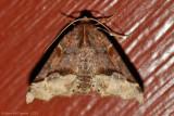 Hubner's Pero Moth