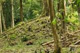Mayan Mound