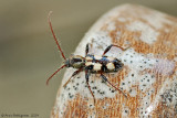 Beetle sp. (Unknown)
