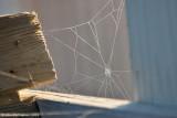Web of a Drunken Spider.....