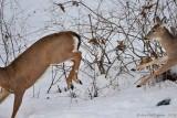 My Missing Bird Feeder & White-tailed Deer