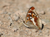 EUROPEAN WILD BUTTERFLIES AND MOTHS