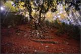Paisajes - Landscapes