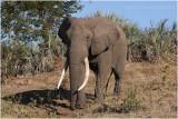 Kruger national park june 2015