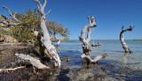Fowlers Camp mangroves