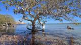 Fowlers Camp Mangrove