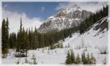 Icefields Snow Shower