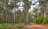 Southern Forests