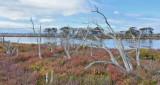 Autumn Day - Erskine Wetlands