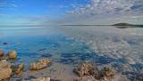 Whalebone  - Shark Bay, WA.