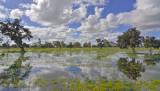 Winter Wetlands