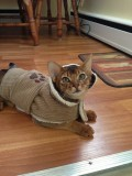 My own little Ikea Monkey!