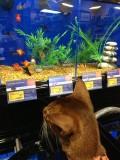 One of his Petsmart trips - CAT TV = fish