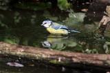 Birds In Feuersbrunn, Lower Austria