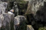 Papagaio do Mar
