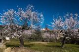 As Amendoeiras de Vila Flor