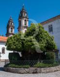 Castanheiro (Árvore de Interesse Público)
